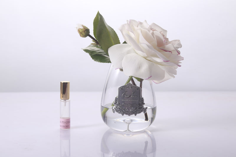 Cote Noire - Tear Drop Tea Rose in clear Glass - Pink Blush
