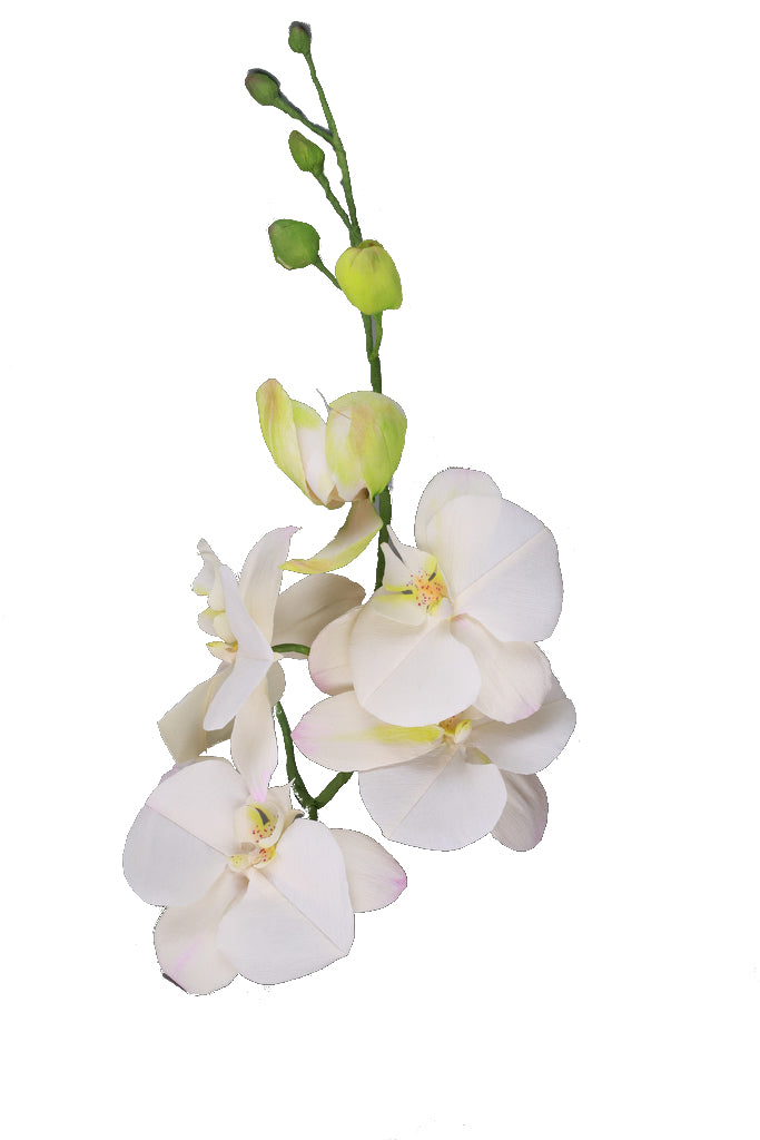 Moth Orchid - Individual floral stem
