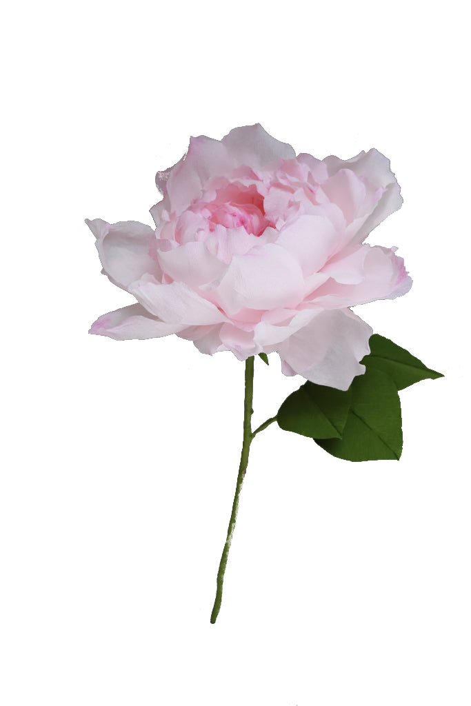 Juliet Rose - Individual floral stem