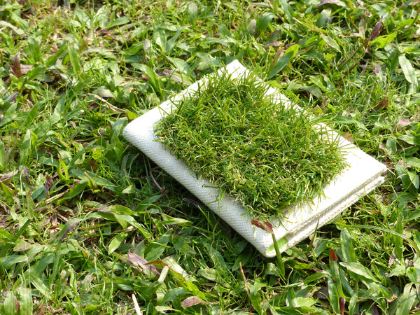 GRASSY Passport Cover - GLUSH/ - 8