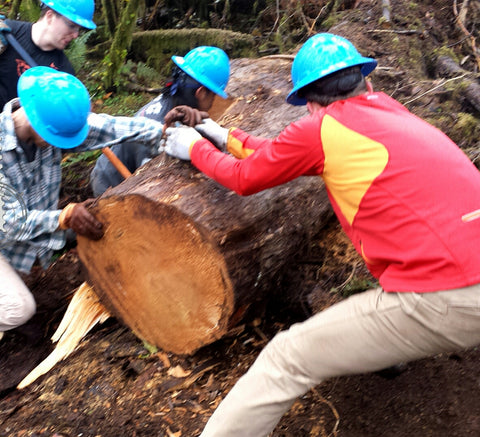 Trail heroes in blue hard hats moving a giant old-growth round out of the way