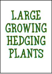 Large Growing Hedge Plants 1.5 meters to 10 meters