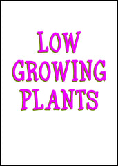 Low Growing Plants