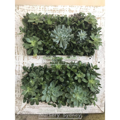 Assorted Succulent Plants In Frame Large - 700Mm X 600Mm Living Wall Picture Default Type