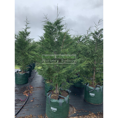 Leighton's Green Conifer SUPER Large 150L Bag