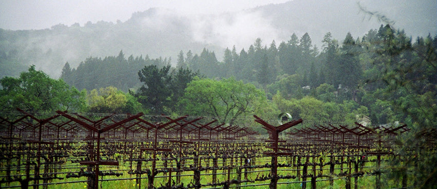 rainfall variations in Napa Valley