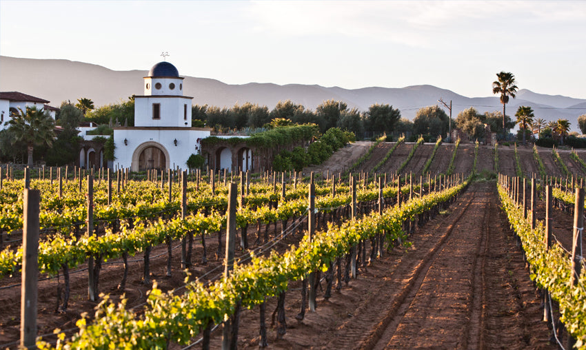 big hammer wines supports mexican wines