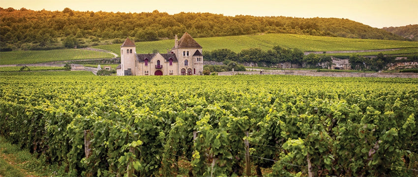 burgundy wine region geology