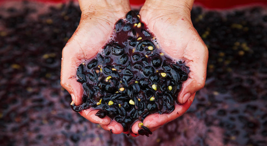 why carbonic maceration