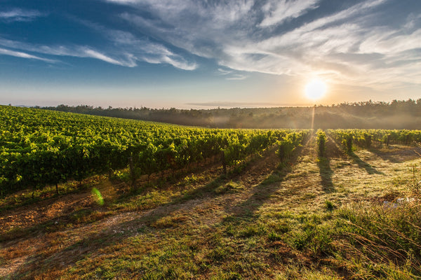 Giro d'Italia! Learn More About the Top Tuscan Wine Regions from Big Hammer Wines, Wine Experts