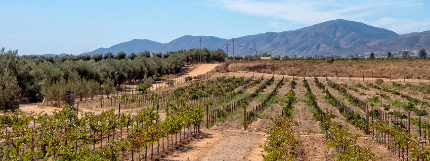 mexico wine vineyards