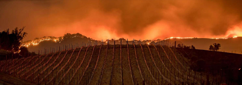 napa valley wildfires smoke taint