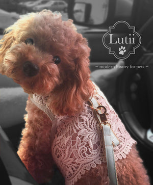 """Cream Victoria""-handmade adjustable lace dog harness - small dog harness, best pet harness, best non pull harness, designer dog harness, lace dog harness, lace pet carrier, best travel pet carrier, small dog carrier, small dog carrier by Lutii pet design, high end pet carriers, best small dog clothing, pet clothing."