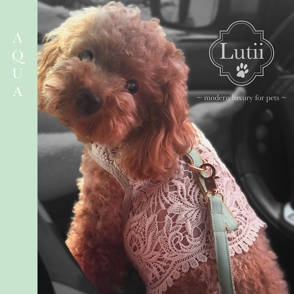 Matching Lutii ribbon leash - small dog harness, best pet harness, best non pull harness, designer dog harness, lace dog harness, lace pet carrier, best travel pet carrier, small dog carrier, small dog carrier by Lutii pet design, high end pet carriers, best small dog clothing, pet clothing.