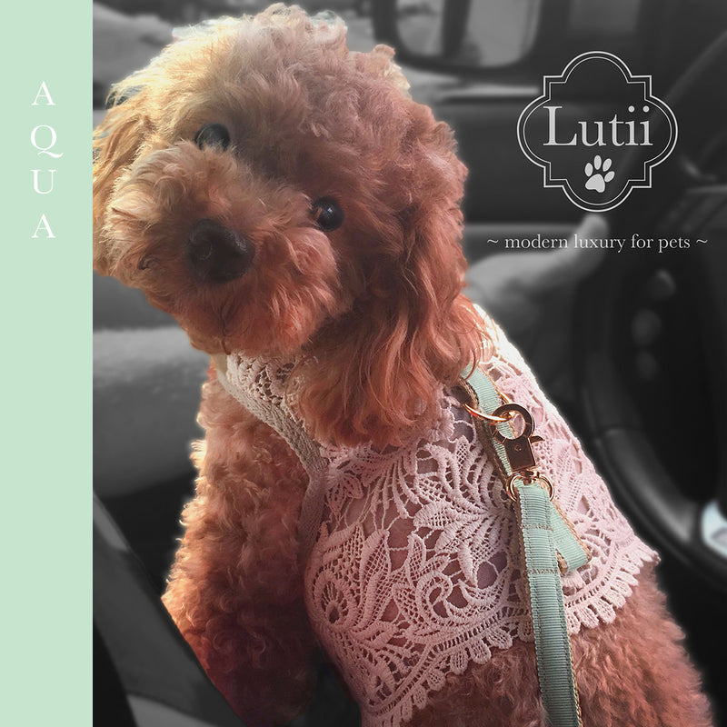 beautiful_hardware_ Lutii_leash_matching_Lutii_harness_small_dog_carrier_Lutii_designer_pet_collection_designer_hardware
