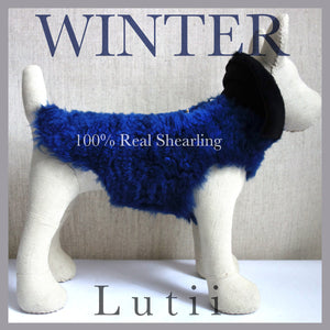 """BLUE DENIUM""-100% shearling handmade blue winter dog coat - small dog harness, small dog carrier by Lutii pet design"