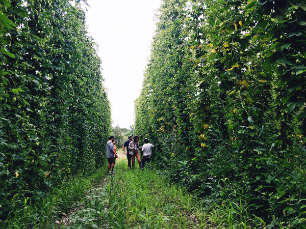 Why aren't Ontario hop farmers feeling the love?
