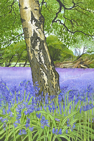 Silver Birch in Bluebells