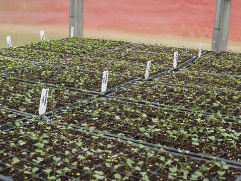 Seedlings sprout in GreenTree soil at the TC3 Farm