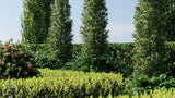 Load image into Gallery viewer, Bundle 07 - Ornamental Plants & Hedges (3D Model)