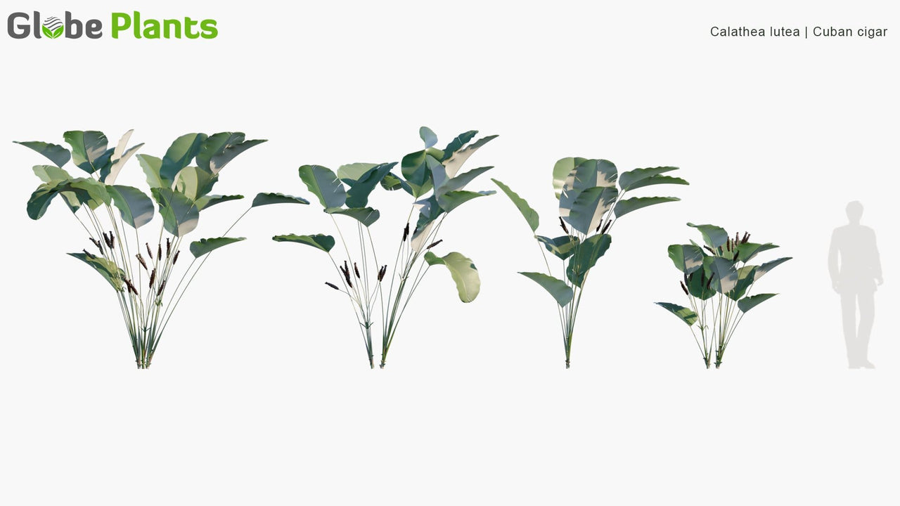 Bundle 05 - Tropical Plants