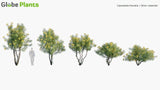 Load image into Gallery viewer, Bundle 03 - Garden Plants