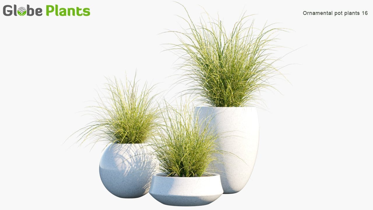 Ornamental Pot Plant 16 - Zebra Grass