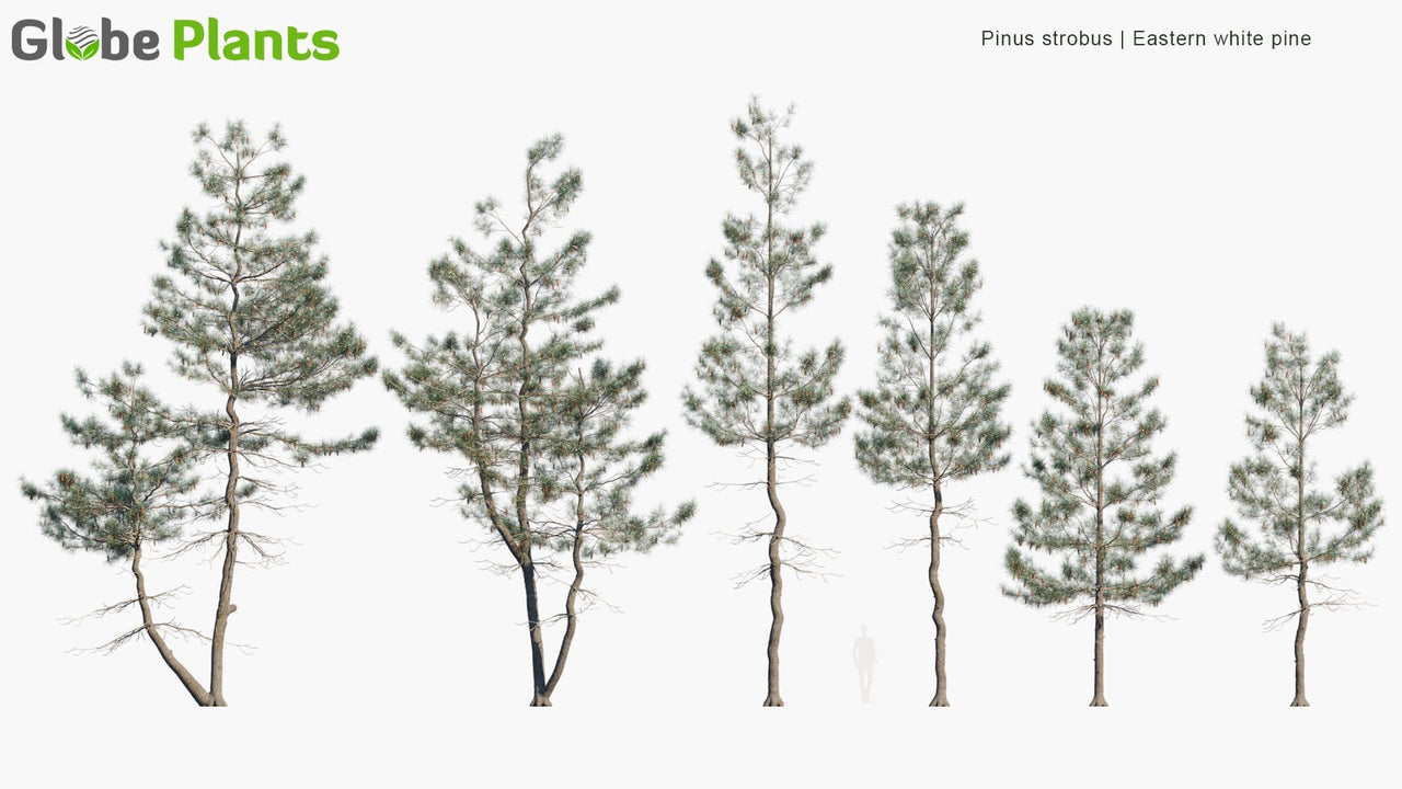 Bundle 10 - Conifer Garden