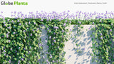 Load image into Gallery viewer, Viola Hederacea - Australian Native Violet