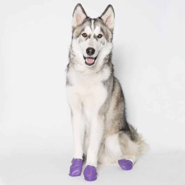 Pawz Waterproof Dog Boots, Purple, 12 Count