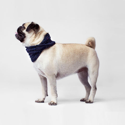 Canada Pooch Cambridge Cableknit Scarf in Navy