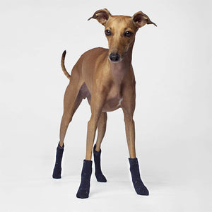 Canada Pooch Cambridge Dog Socks in Navy