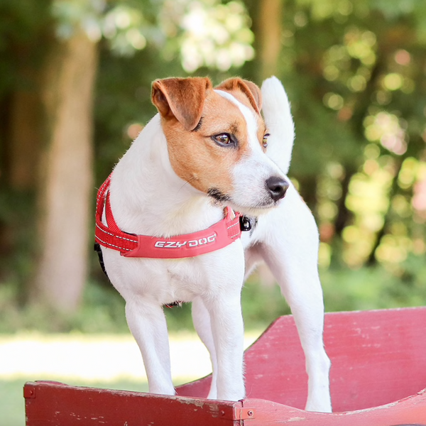 EZYDOG Quick Fit™ Dog Harness in Red