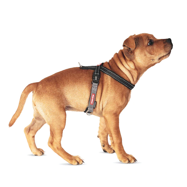 EZYDOG Crosscheck™ Harness in Black