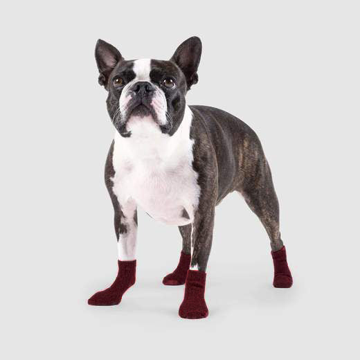 Canada Pooch Cambridge Dog Socks in Maroon