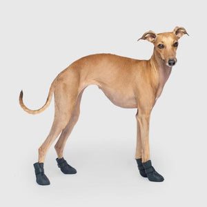 Canada Pooch Unlined Wellies in Black
