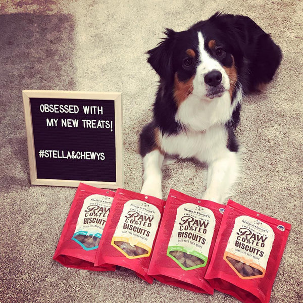 Stella & Chewy's Raw Coated Biscuits Cage-Free Chicken Recipe Dog Treats