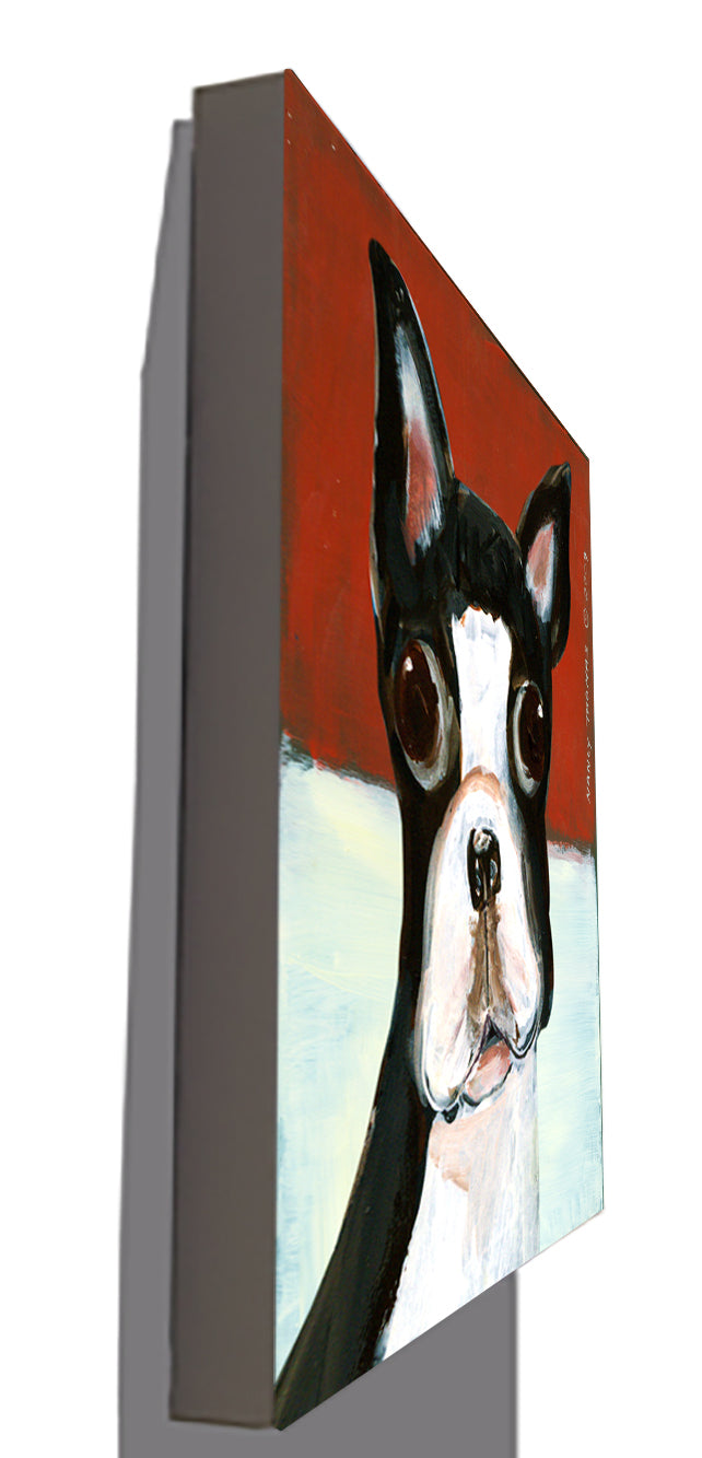 Gallery Canvas - Dog Face - Boston Terrier
