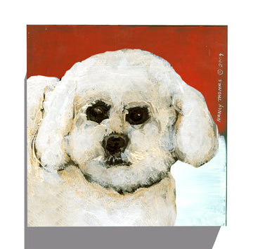 Gallery Canvas - Dog Face - Bichon
