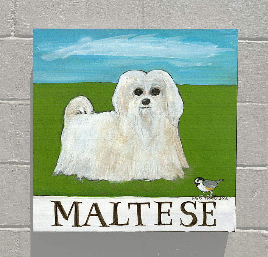 Gallery Grand - Doggie - Maltese