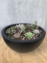Load image into Gallery viewer, Cacti / Succulent Bowl