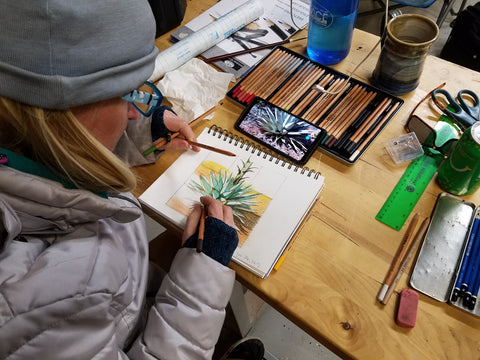 Sydney Francis drawing in colored pencil the Century Plant