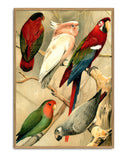 Parrots left side print THE DYBDAHL CO