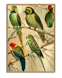 Parrots right side print THE DYBDAHL CO
