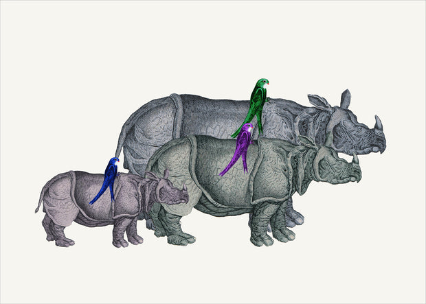 Rhinos and Birds