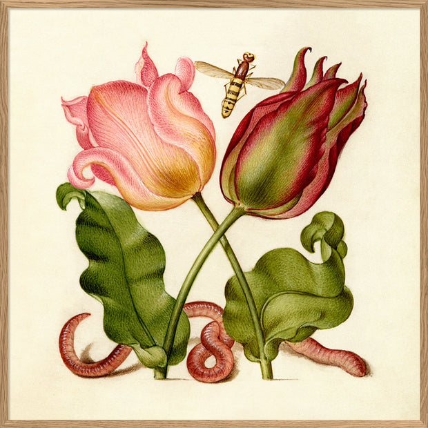 Worm and Tulips