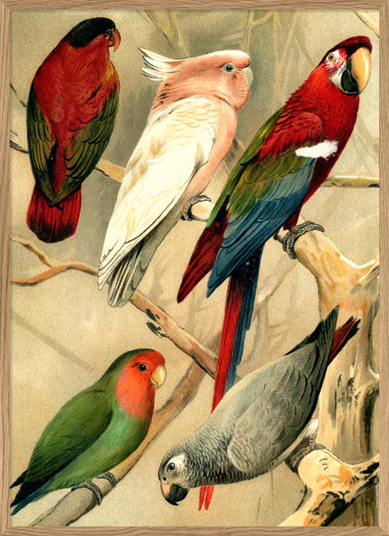 Parrots. Left side. No. 2900L