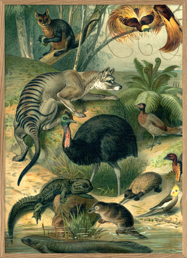 Australian Fauna Left side
