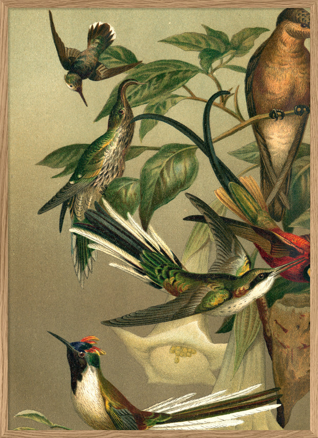 Hummingbirds. Left side No. 2905L