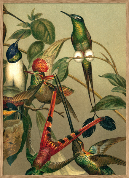 Hummingbirds. Right side No. 2905R